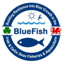 logo of Blue Fish