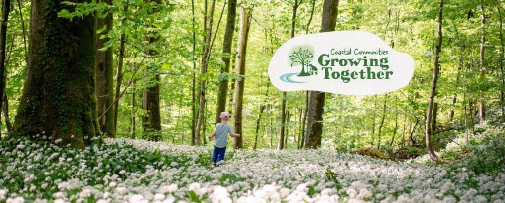 CCAT Tree project